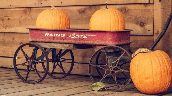 Abóbora, Muito Mais Que Um Símbolo De Halloween